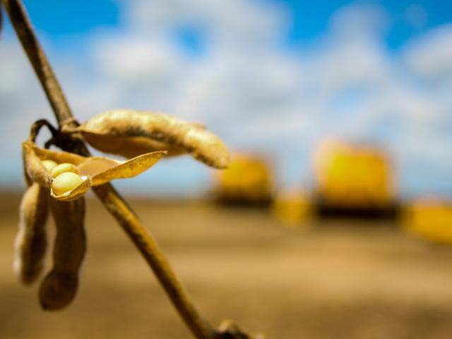 Mercado de soja de MS é beneficiado com quebra de safra argentina (Foto: Marcos Ermínio/Arquivo)