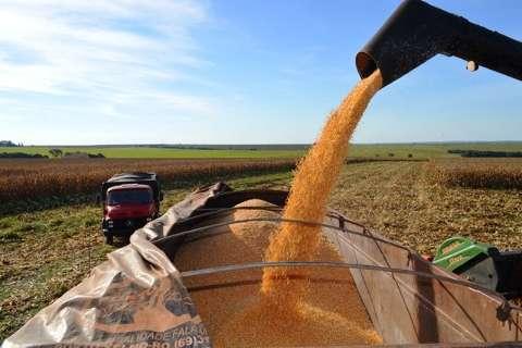 Colheita do milho safrinha termina com recorde de 9 milhões de t