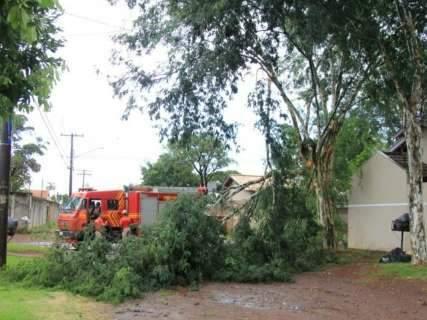Com ventos de até 57 km por hora, chuva derruba árvore e interrompe trânsito