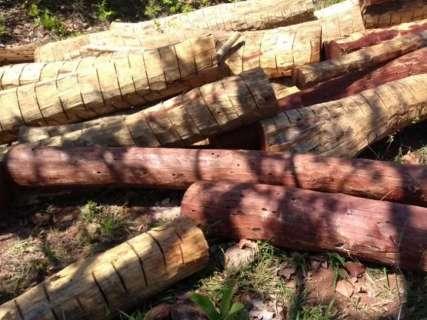 Idoso é multado por armazenar madeira sem autorização ambiental