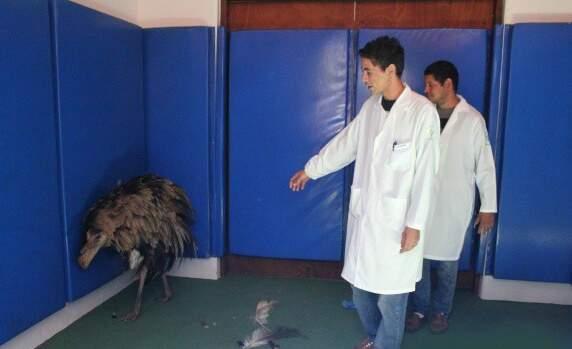 Ema entrou no hospital e deu trabalho para ser capturada. (Foto: Divulgação /  Unigran)