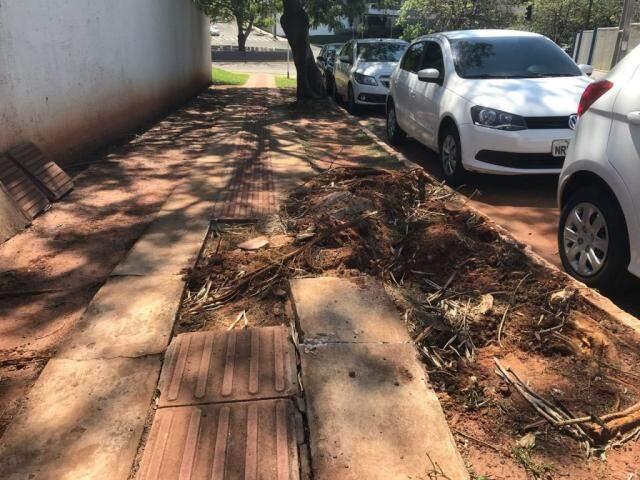 A calçada foi parcialmente destruída após a queda de uma árvore. (Foto: Direto das Ruas)
