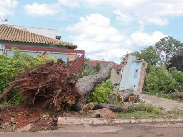 Árvore de grande porte foi arrancada pela raiz e destruiu parte do muro da residência (Foto: Marcos Maluf)
