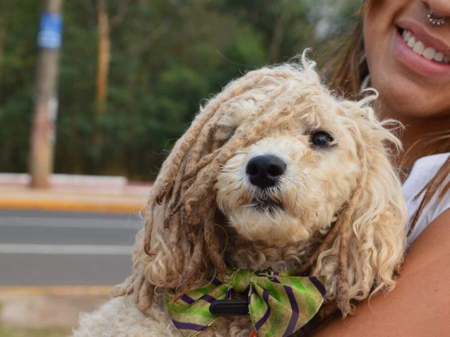 Cão ganhou dread para ficar parecido com seu dono. (Foto: Thailla Torres)