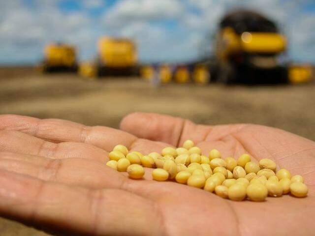 Soja colhida em safras passadas em Mato Grosso do Sul: vendas da produção estão mais avançadas em 2018 (Foto: Marcos Ermínio/arquivo)