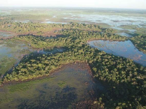 Pantanal de Mato Grosso do Sul (Foto: Famasul/Divulgação)