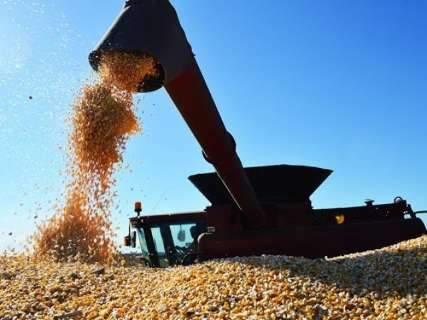Com ritmo acelerado na região norte, colheita de milho alcança 79% da área