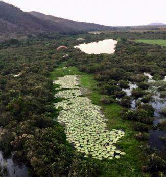 No vale da Serra, vitória-régia e muito verde