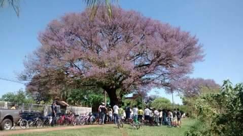 Abraço coletivo alerta para importância da preservação de árvores