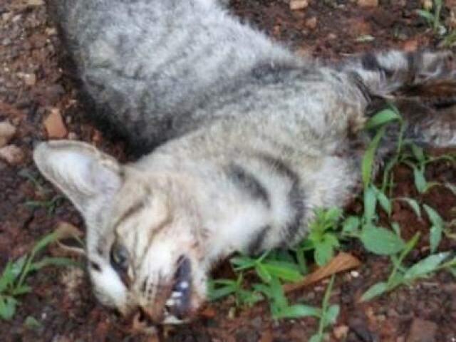 Ao menos três gatos foram mortos por envenenamento (Direto das Ruas)