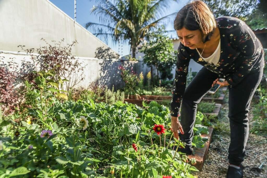 É possível cultivá-las em um horta comum no quintal de casa ou até vasinhos para quem tem pouco espaço no imóvel.