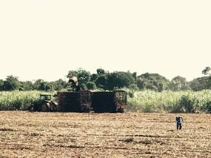 Agricultura estima em R$ 535,4 bilhões valor bruto da produção agropecuária