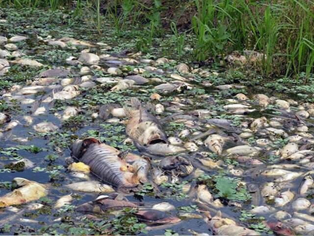 Hipótese mais provável até agora é que peixes tenham morrido pela decoada. (Foto: Divulgação)