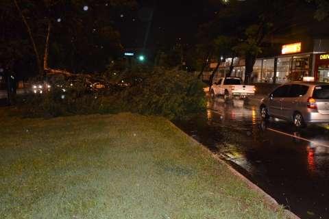 Ventos atingem 90 km/h, derrubam árvores, semáforo e placas