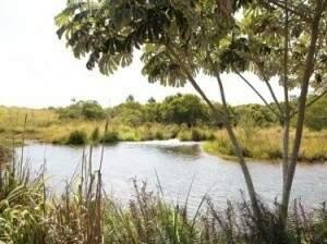 Manancial do Córrego Guariroba já foi responsável pelo abastecimento de mais de 50% da Capital. (Foto:Divulgação)