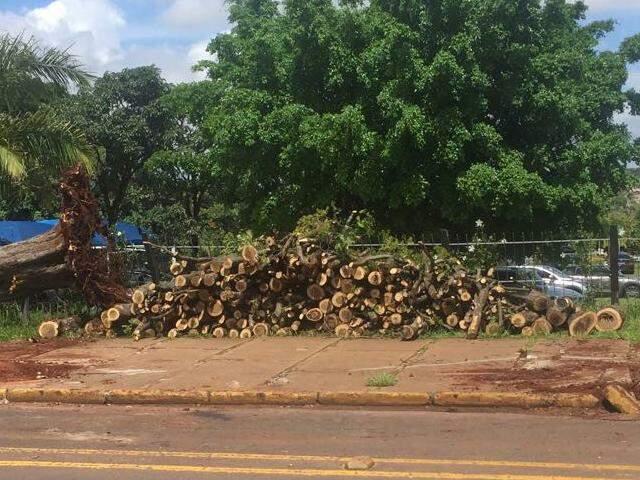 Troncos das árvores que foram retiradas do entorno da unidade de saúde (Foto: Direto das Ruas)