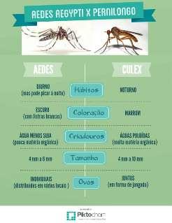 Estudo da Fiocruz aponta pernilongo como possível transmissor do vírus Zika