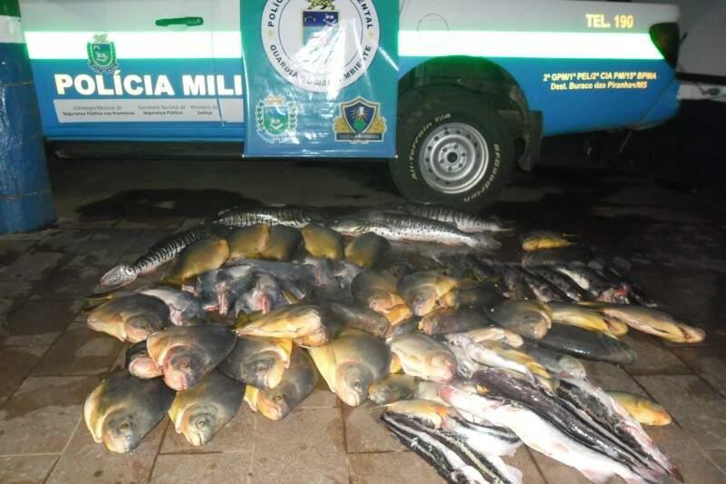 Foram apreendidos 105kg de pescado. (Foto: Divulgação)