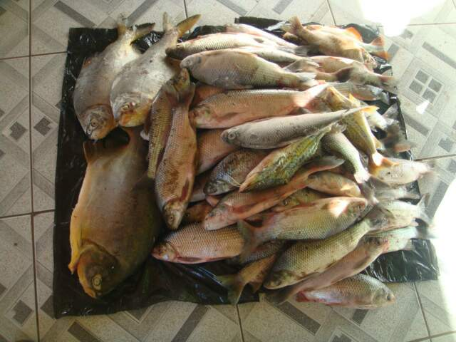 Pescado apreendido (Foto: Divulgação/PMA)
