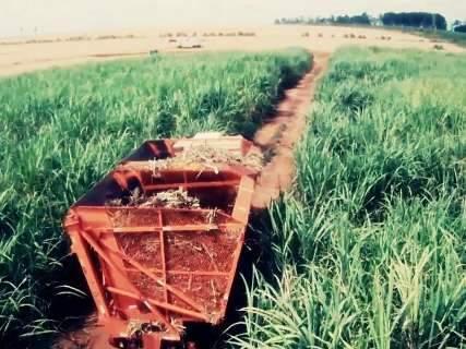 Valor da Produção Agropecuária é estimado em R$ 28 bilhões em MS