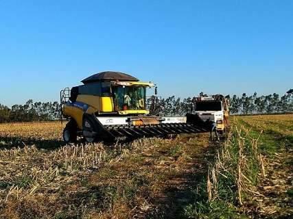 Colheita do milho termina em uma semana e produção cresce 50%