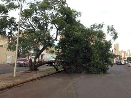 Chuva da tarde termina com queda de árvores e asfalto arrancado na Capital