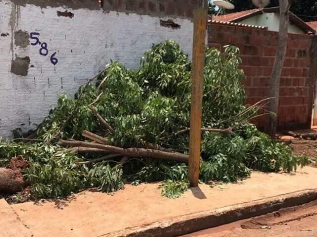 Árvores caída na Rua Itapeva ...(Foto: Aletheya Alves)