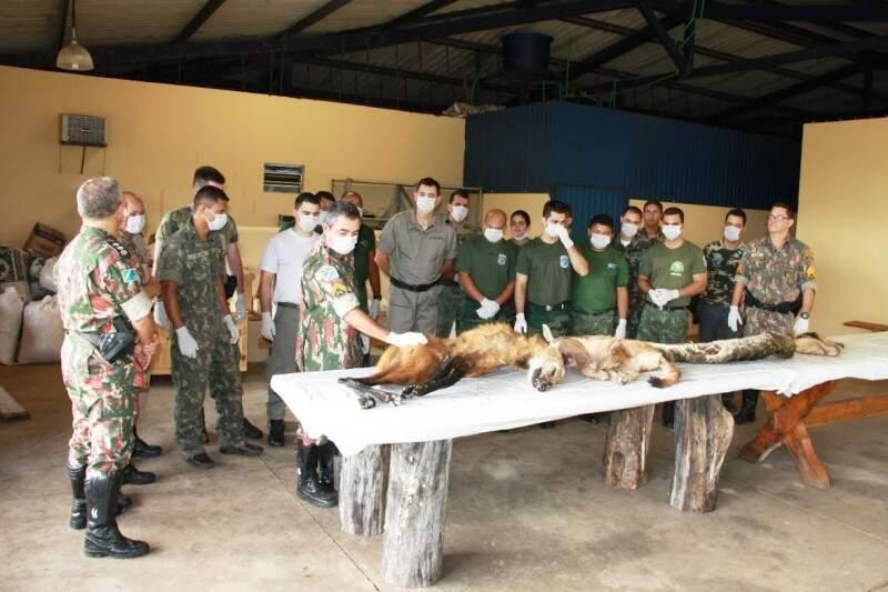 O curso acontece em uma fazenda de Itaquiraí. (Foto: Divulgação/ PMA)