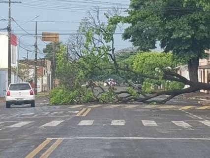 Chuva derrubou ao menos 37 árvores na Capital, contabilizam os bombeiros