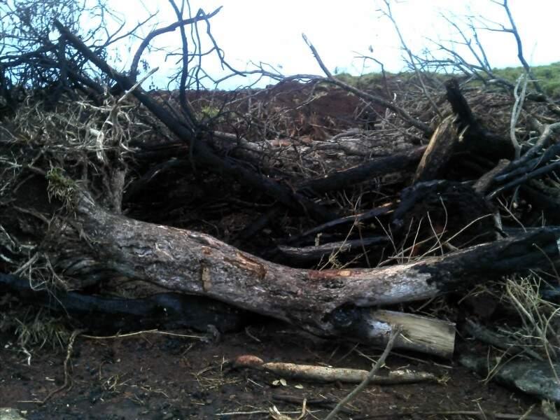 O fazendeiro desmatava ilegalmente a área e fazia buracos para esconder a madeira. (Foto: PMA)
