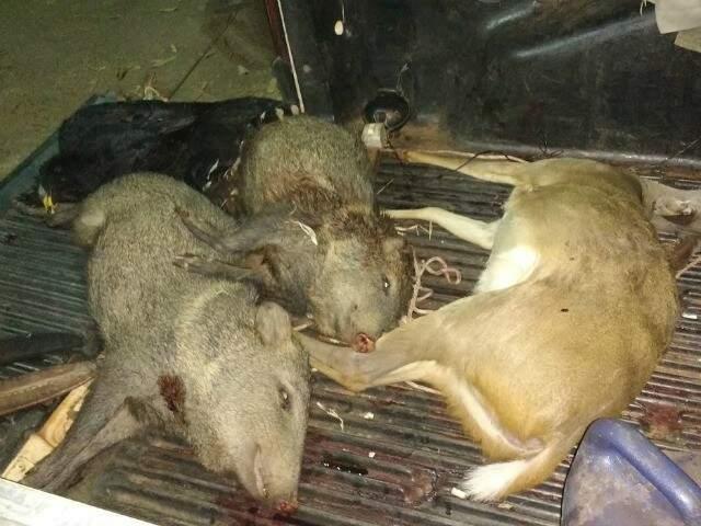 Animais abatidos pelo grupo de caçadores em MS (Foto: divulgação)