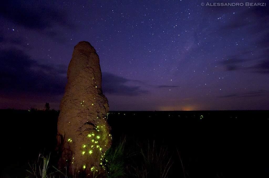O fenômeno natural da bioluminescência no Parque Nacional das Emas acontece no início do período das chuvas e vai até dezembro (Foto: Reprodução)