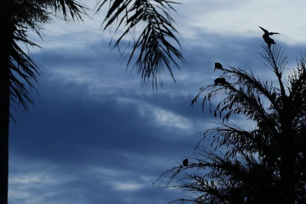 O domingo na Capital amanheceu com céu aberto, mas previsão é chuva no fim da tarde (Foto: André Bittar)