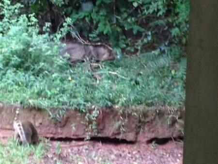 Animais puderam ser vistos na entrada do Parque dos Poderes, em Campo Grande. (Foto: Direto das Ruas)