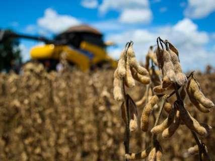 De olho nas variações do mercado, produtores atrasam venda da soja