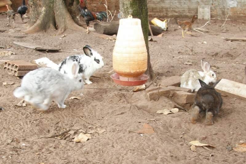 Um dos animais utilizados para teste é coelho. (Foto: Marcelo Victor. (Foto: Marcelo Victor)