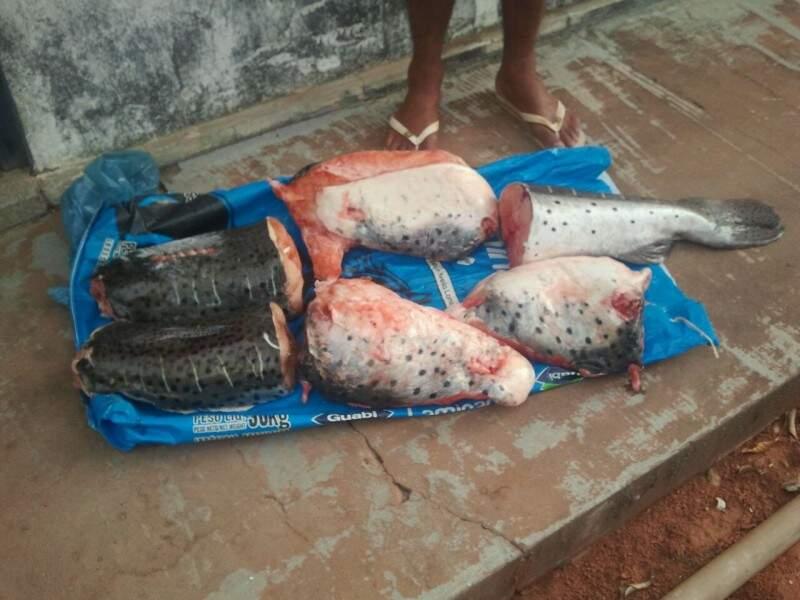 O servidor tentou vender o pescado ilegal para dois policiais (Foto: Divulgação)