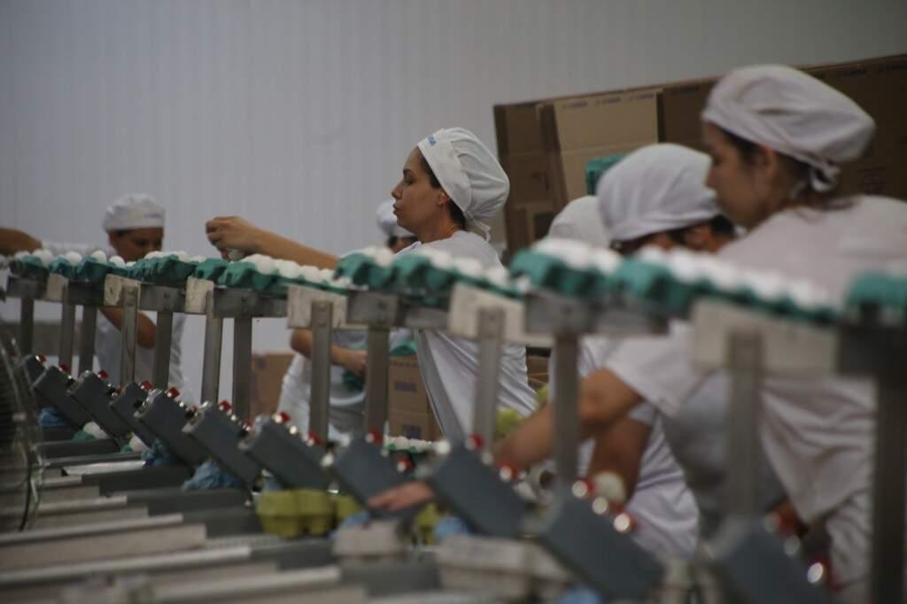 Mulheres são maioria no processo de seleção de ovos na cooperativa (Foto: Marcos Ermínio)