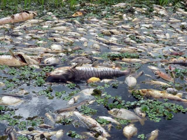 Resultado da coleta de água no rio deve sair em cinco dias. (Foto: O Pantaneiro)