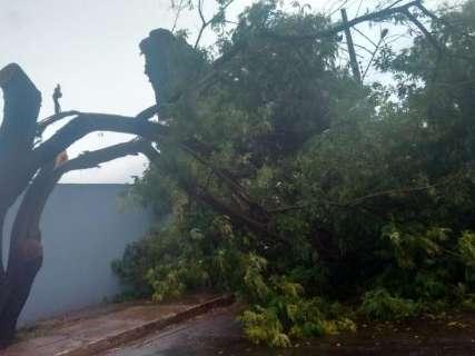 Árvore cai com temporal e atrapalha o trânsito do Joquei Clube