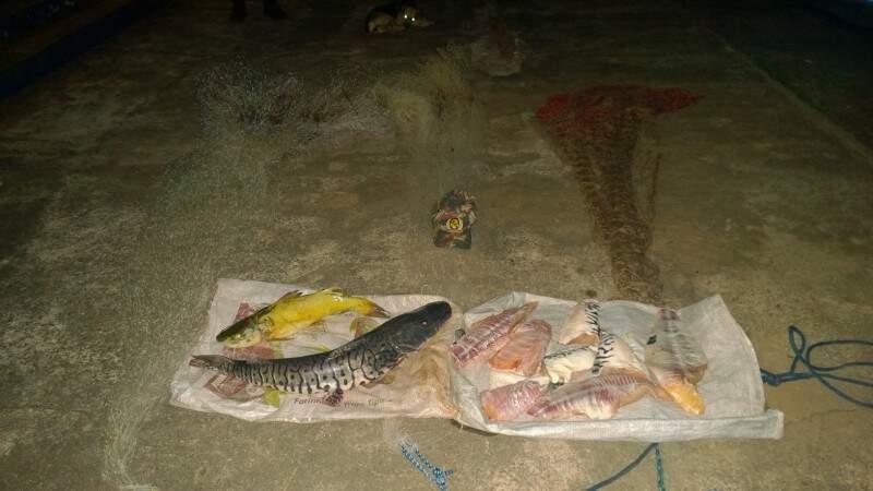 Jaú, cachara, carcaças de pescados e tarrafas, foram apreendidos na noite de ontem. (Foto: Divulgação)