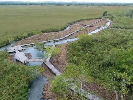 Produtor é multado em R$ 10 mil por desmatar próximo ao Rio Formoso