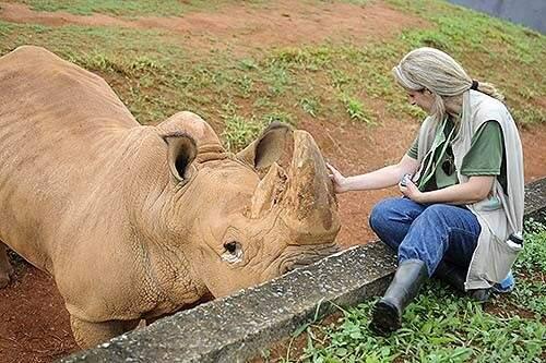 Todos os animais pertencem à família Stevanovich, proprietária do circo. (Foto: Andre Borges/Agência Brasília)