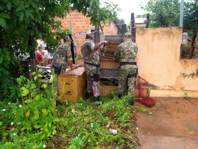Patrulha Ambiental e PMA durante captura de Tamanduá Bandeira (Foto: Divulgação/ PMA)