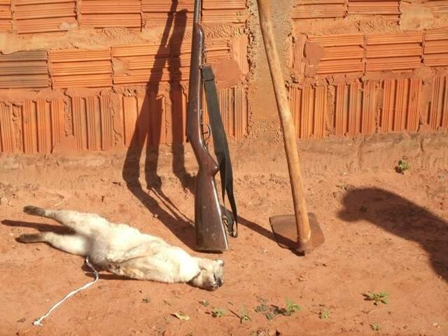 O animal morto, a espingarda e as ferramentas apreendidas. (Foto: Divulgação/PMA)