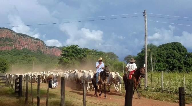 Comercialização de bovinos em MS cresceu 83% em dois meses. (Foto: Divulgação)