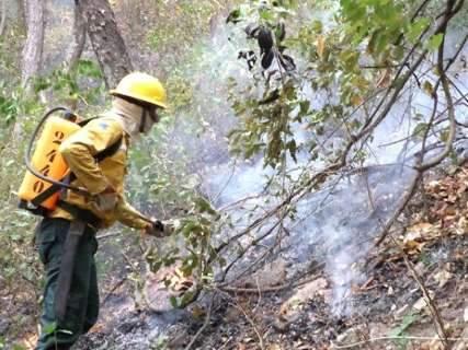 Chuva em agosto reduz número de incêndios na vegetação em MS
