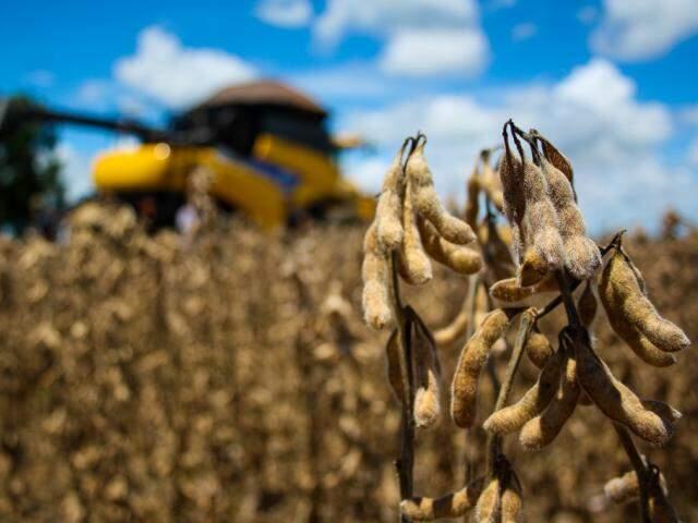 Colheita de soja em MS; receita com exportação do grão cresceu 20% (Foto: Marcos Ermínio)
