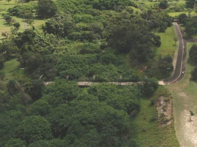 No Parque do Sóter, vegetação oculta lago engolido por sedimentos. (Foto: Gabriel Rodrigues)