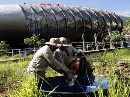Agentes de saúde e detentos fazem mutirão de limpeza no Aquário
